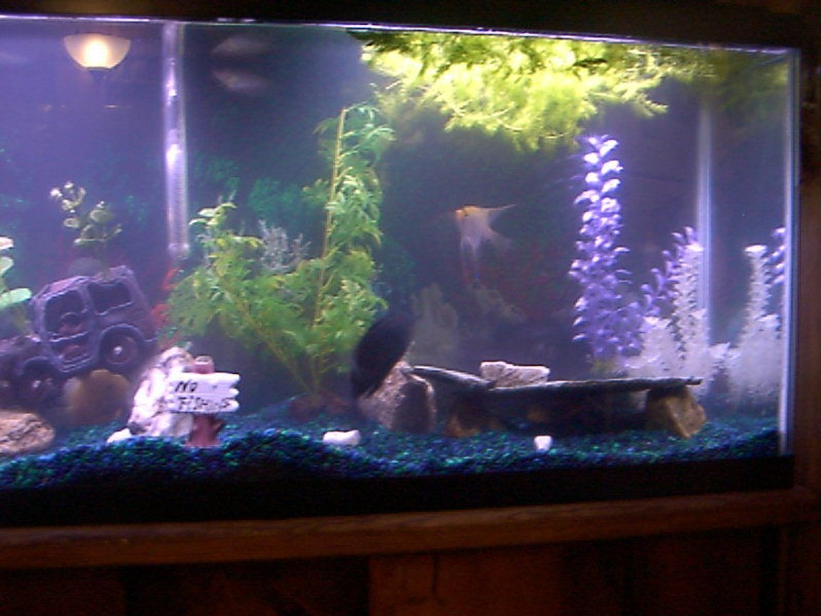 fish tank picture - My Fishy Tank