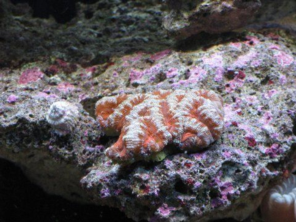fish tank picture - acan 3