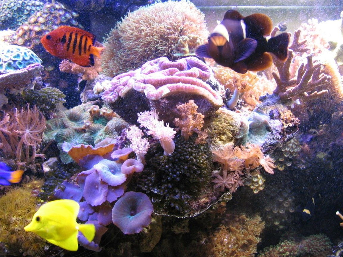 fish tank picture - corals