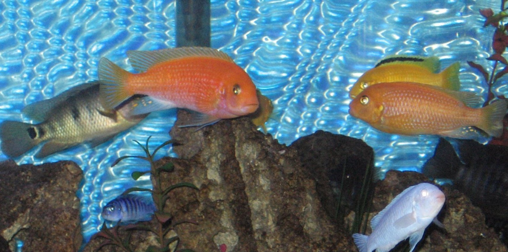 fish tank picture - more fish