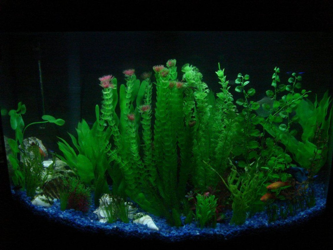 fish tank picture - Main Tank View