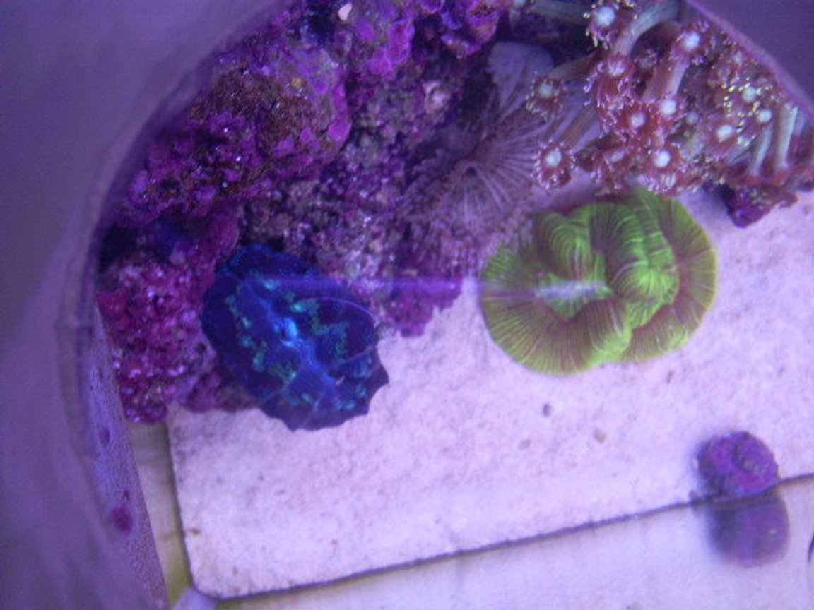 fish tank picture - clams look way different if you look at them from above, the colors completly change