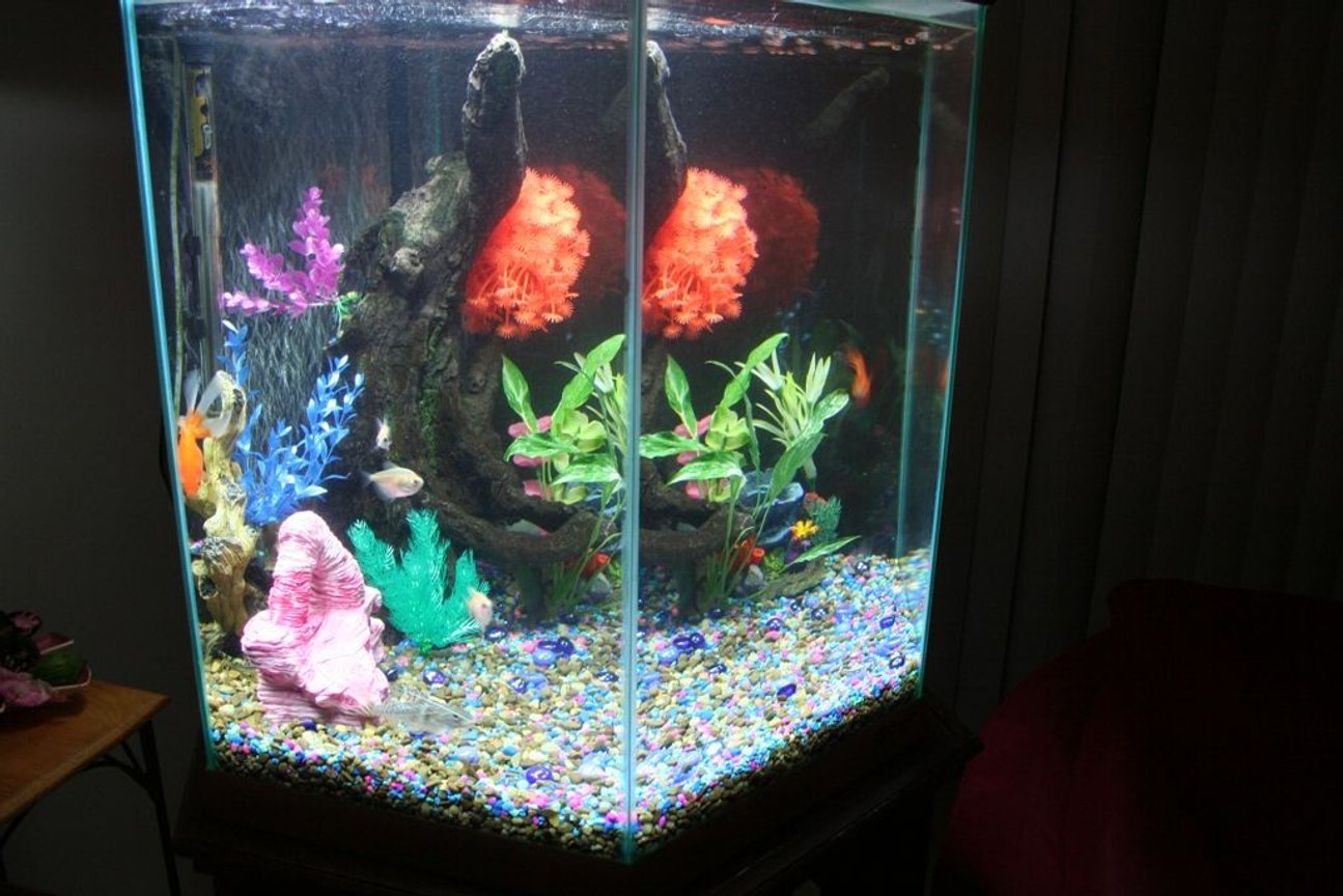 fish tank picture - Left Side View of Tank