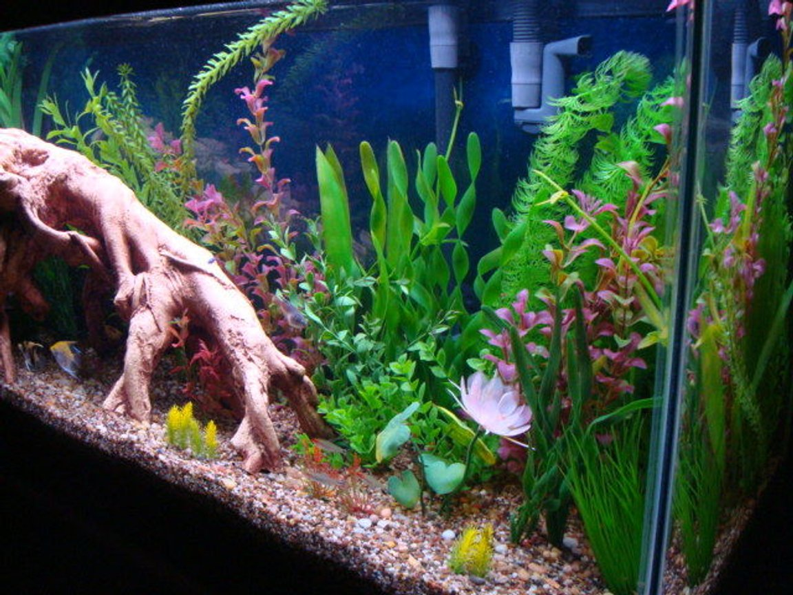 fish tank picture - View from right side at an angle looking left.