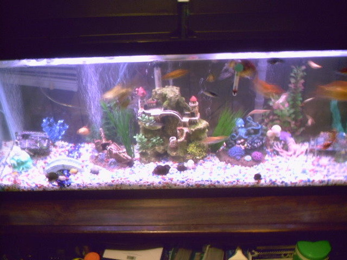 fish tank picture - First 55 Gallon, before it leaked and got replaced (Old Setup)