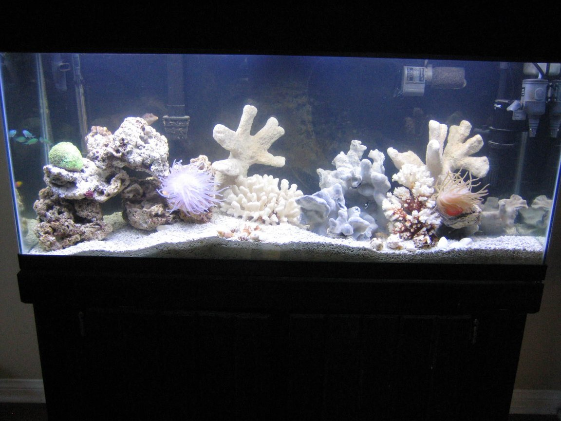 fish tank picture - here she is ! ! !