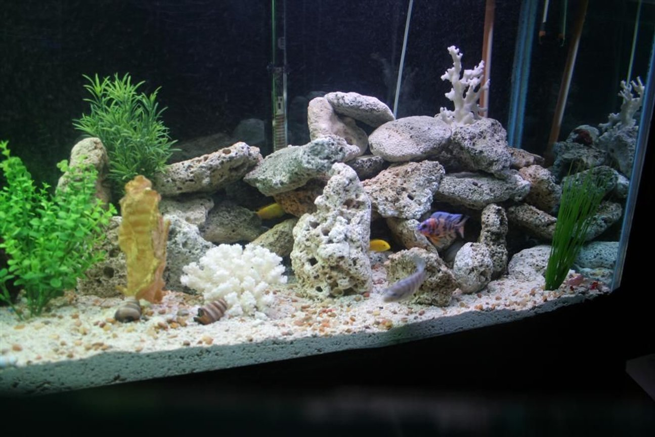fish tank picture - lots of hiding spots!