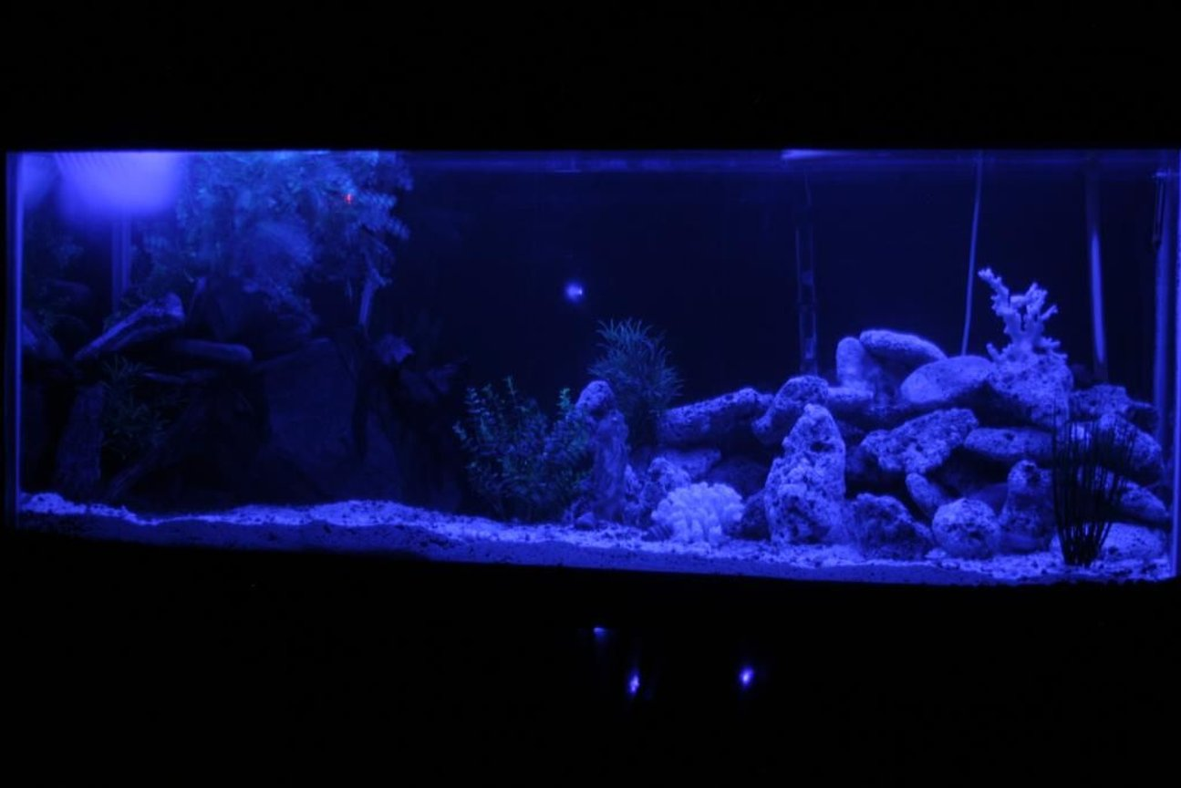 fish tank picture - MOON LITE