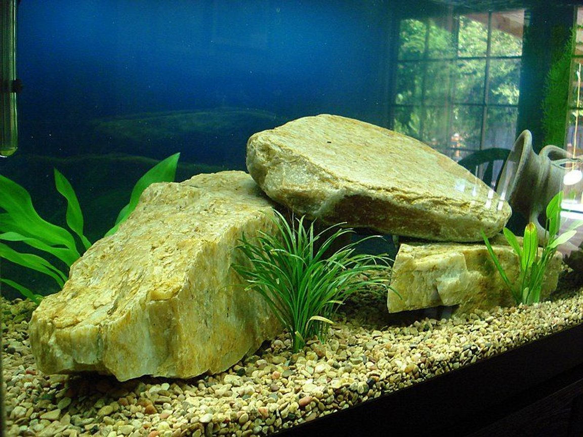 fish tank picture - We made a tunnel out of the large rocks that the fish swim through...The Pleco likes in under there because it is shaded for him...The 5 large rocks in the tank weigh 67 lbs.