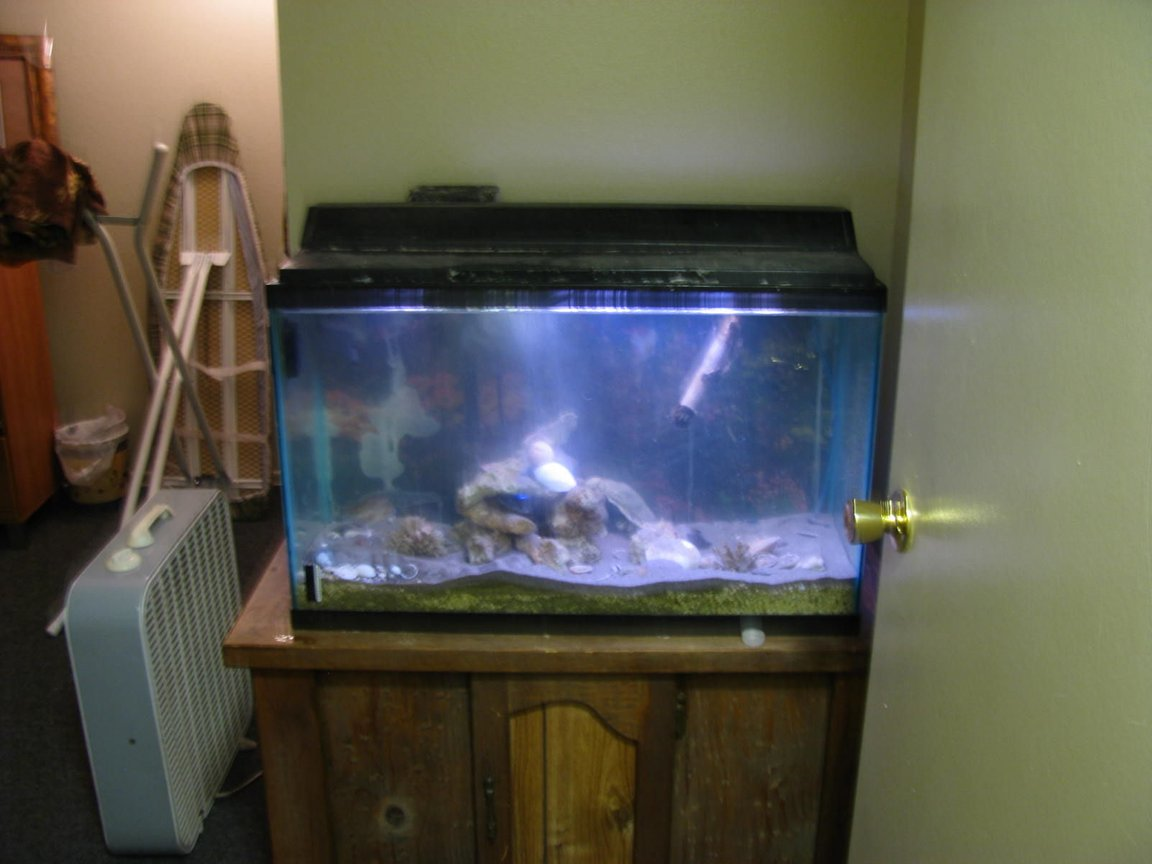 fish tank picture - far view of my small tank ( hopping to get a bigger tank next year)