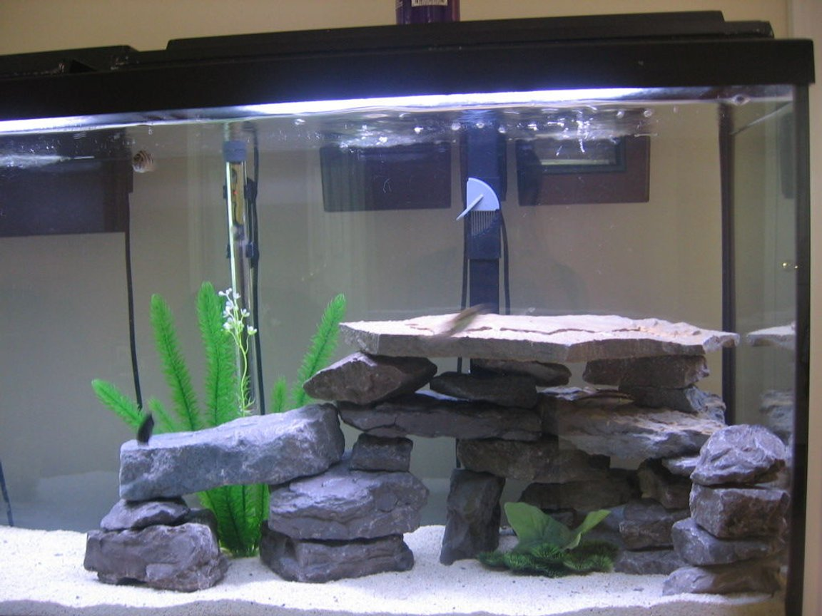 fish tank picture - 55 gallon African and American Freshwater