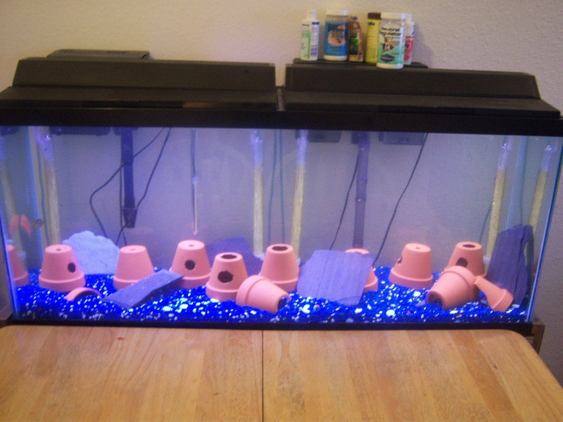 fish tank picture - test pic