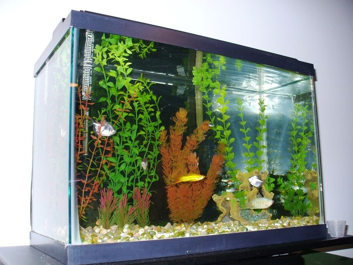 fish tank picture - same 20 gallon, different angle