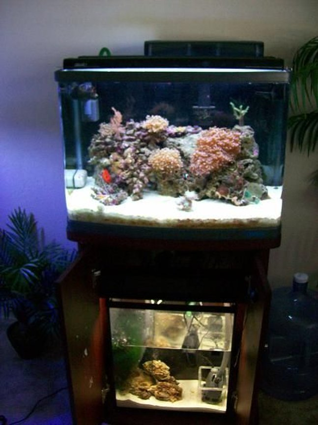 fish tank picture - 30 GAL REEF