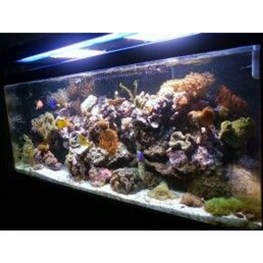 fish tank picture - another angle of the tank
