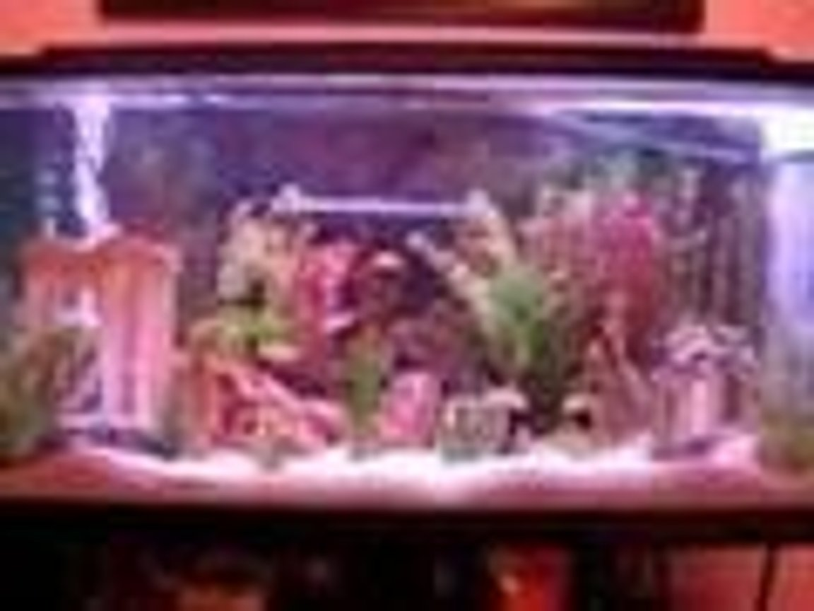 fish tank picture - Here's my sweet fish tank