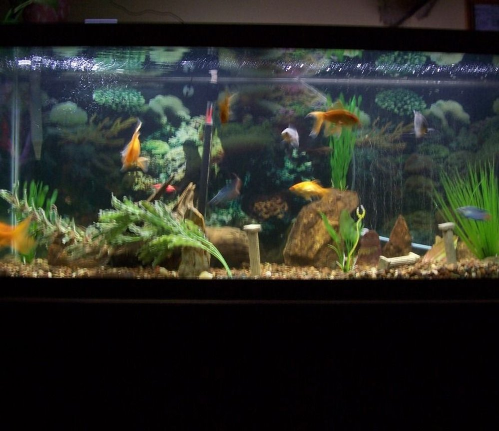 fish tank picture - whole tank view 1