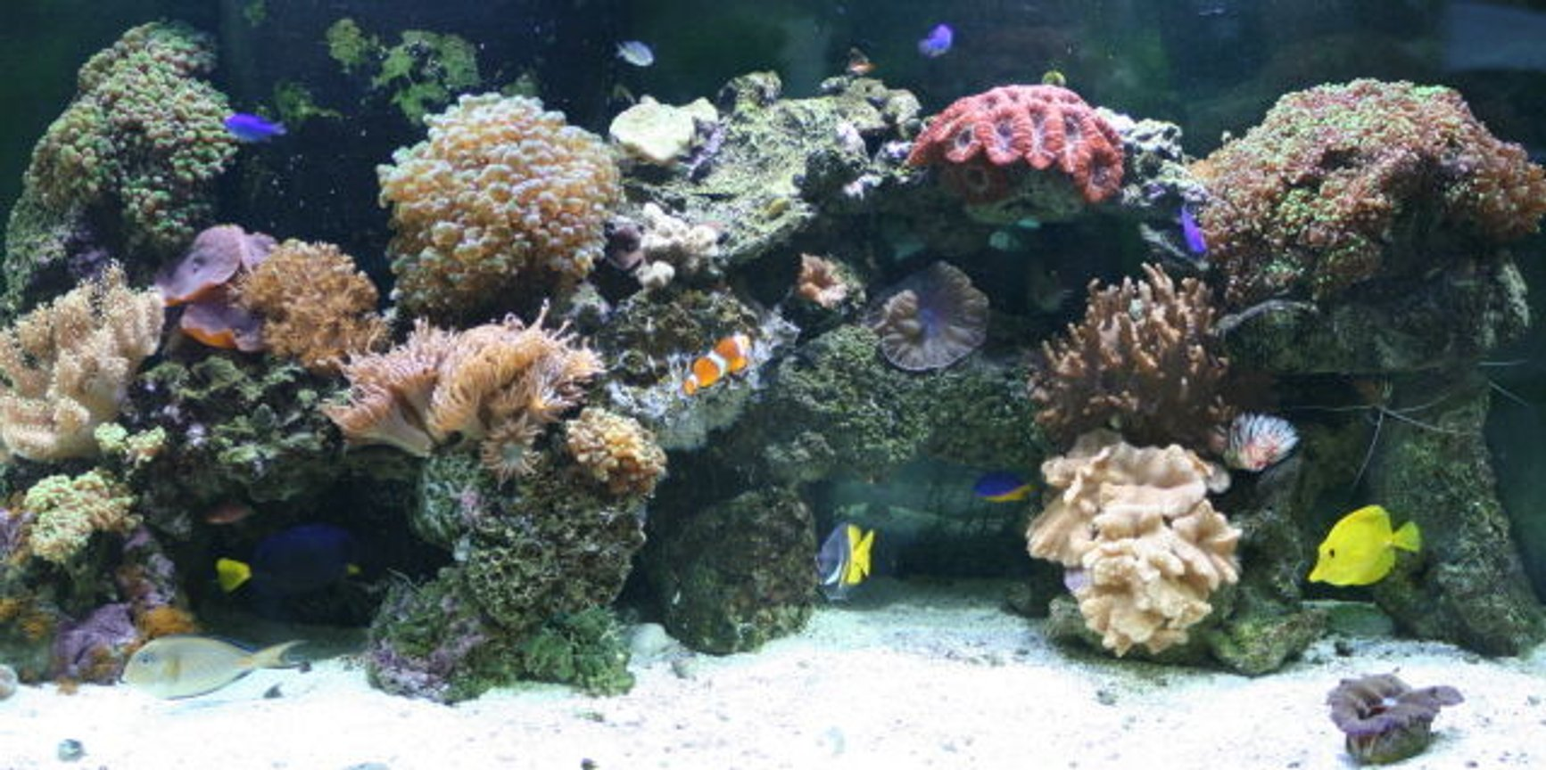fish tank picture - 11-08