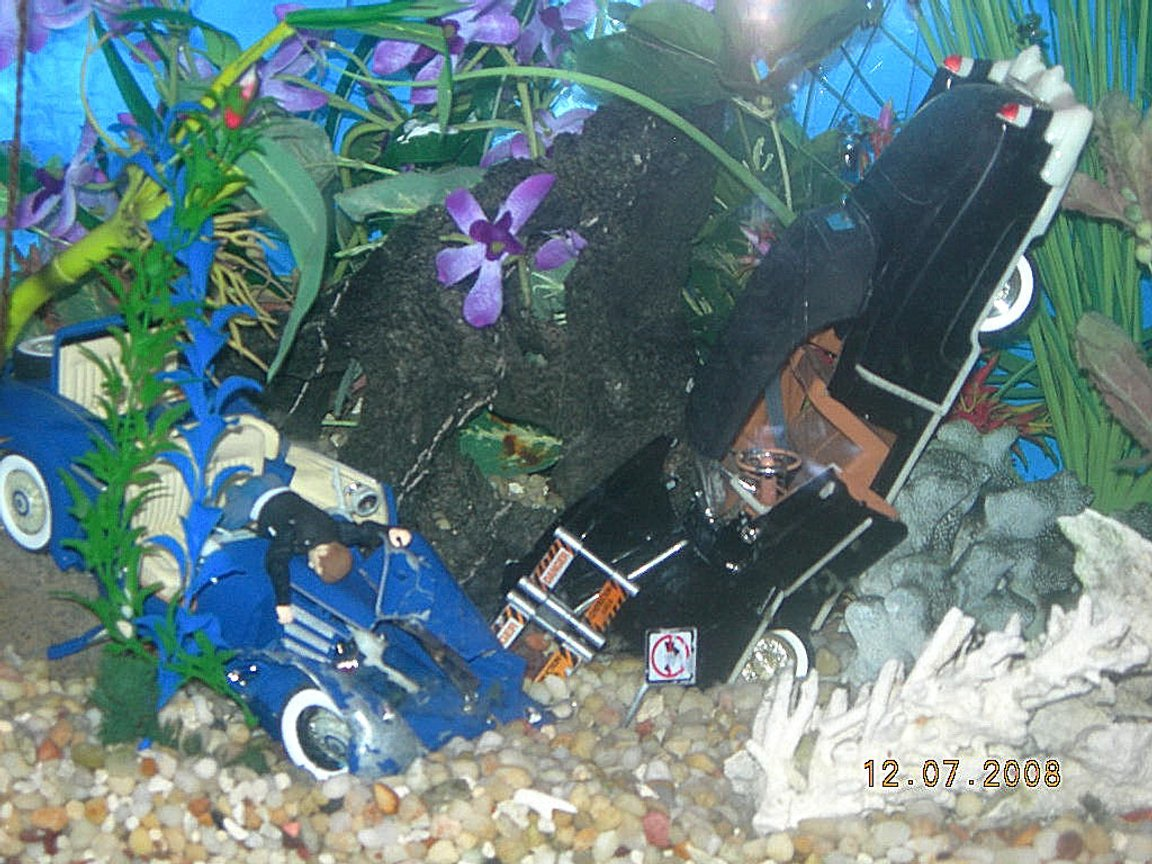 fish tank picture - dont drink and drive