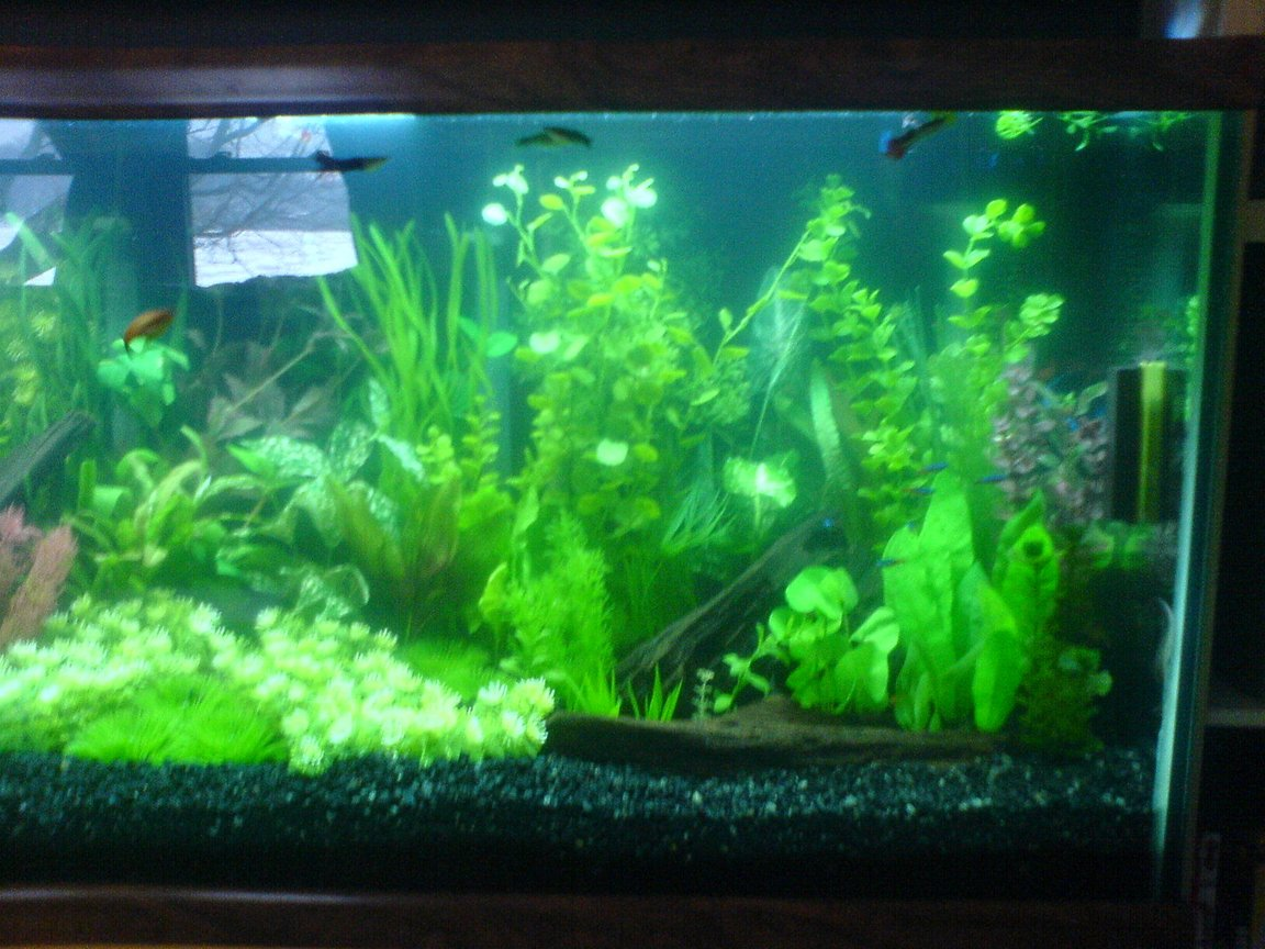 fish tank picture - Right