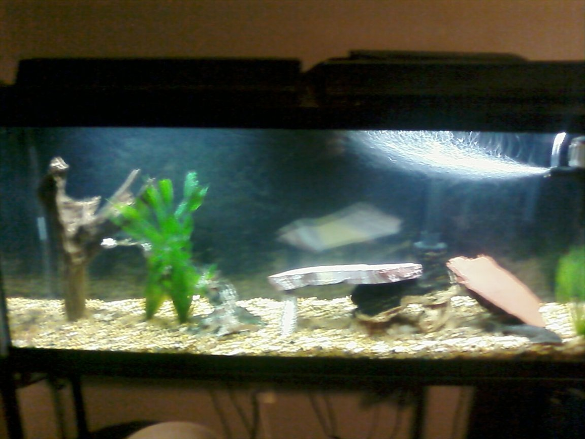 fish tank picture - My tank, pretty empty at the moment