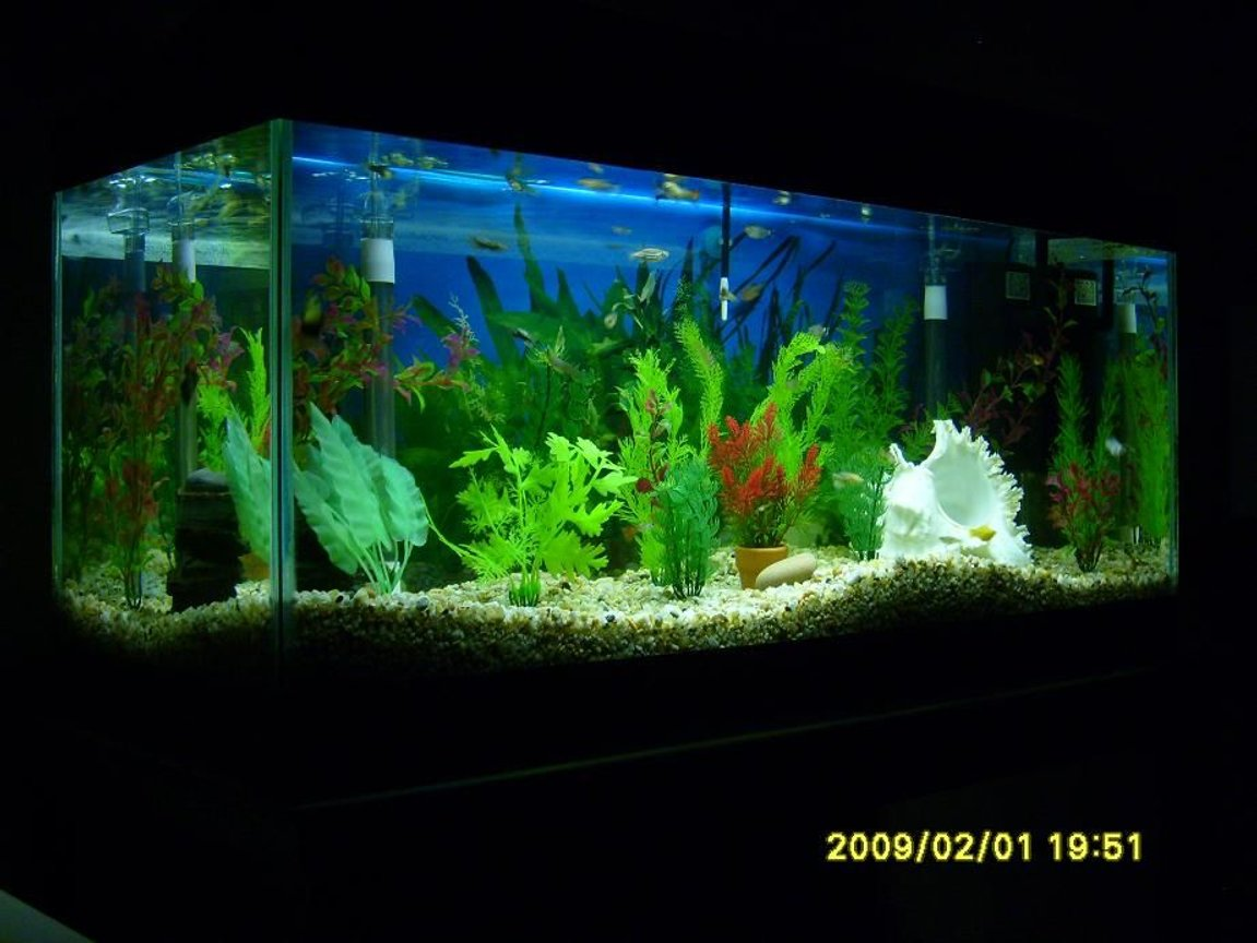 fish tank picture - My Fishtank #5a