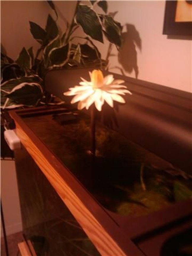 fish tank picture - HERE'S A FLOWER THAT GREW FROM MY TANK.ANYONE KNOW WHAT IT IS??