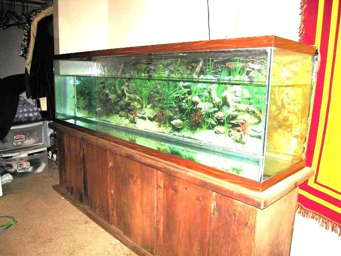 fish tank picture - Fresh start new opportunities.