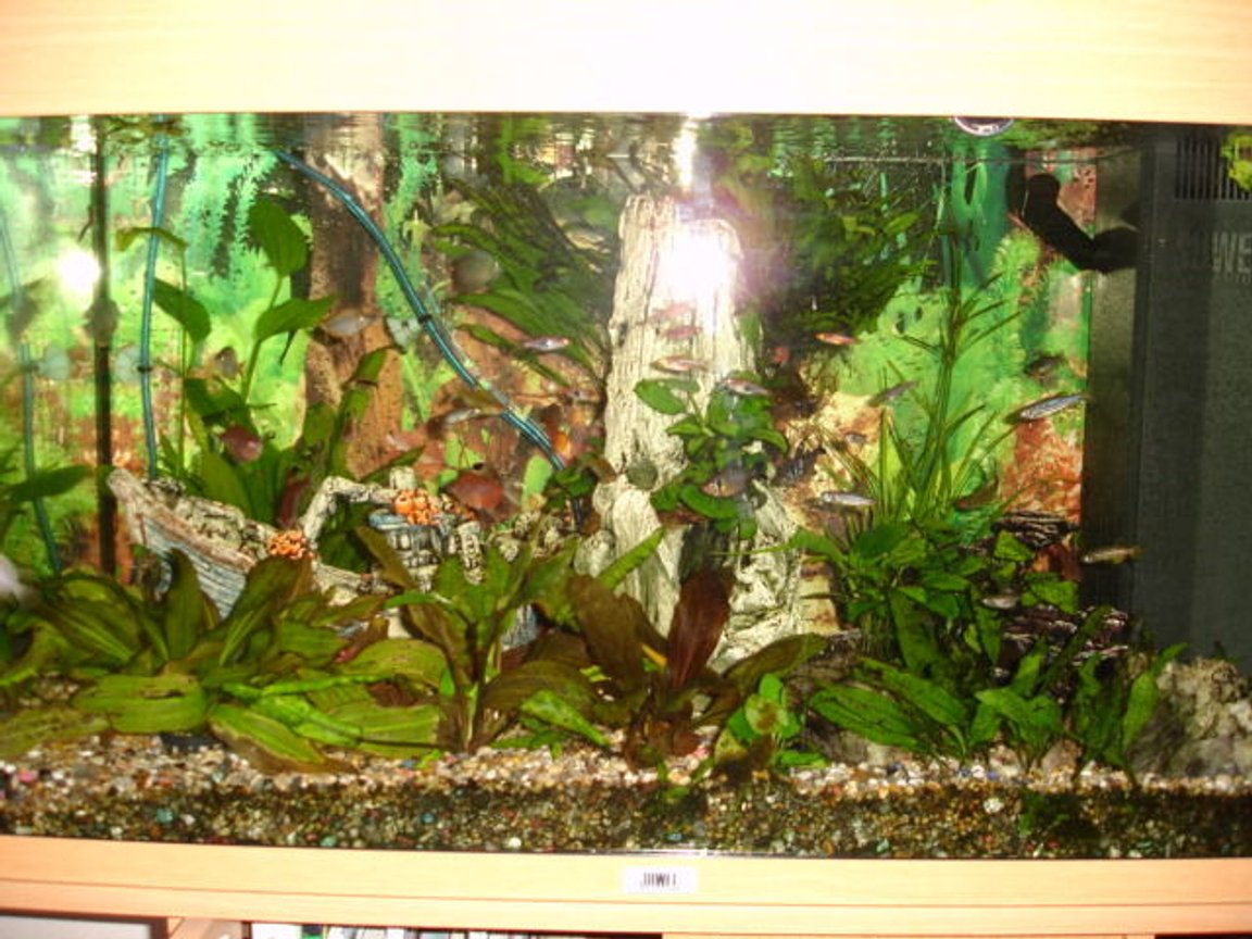 fish tank picture - slightly further back view of tank