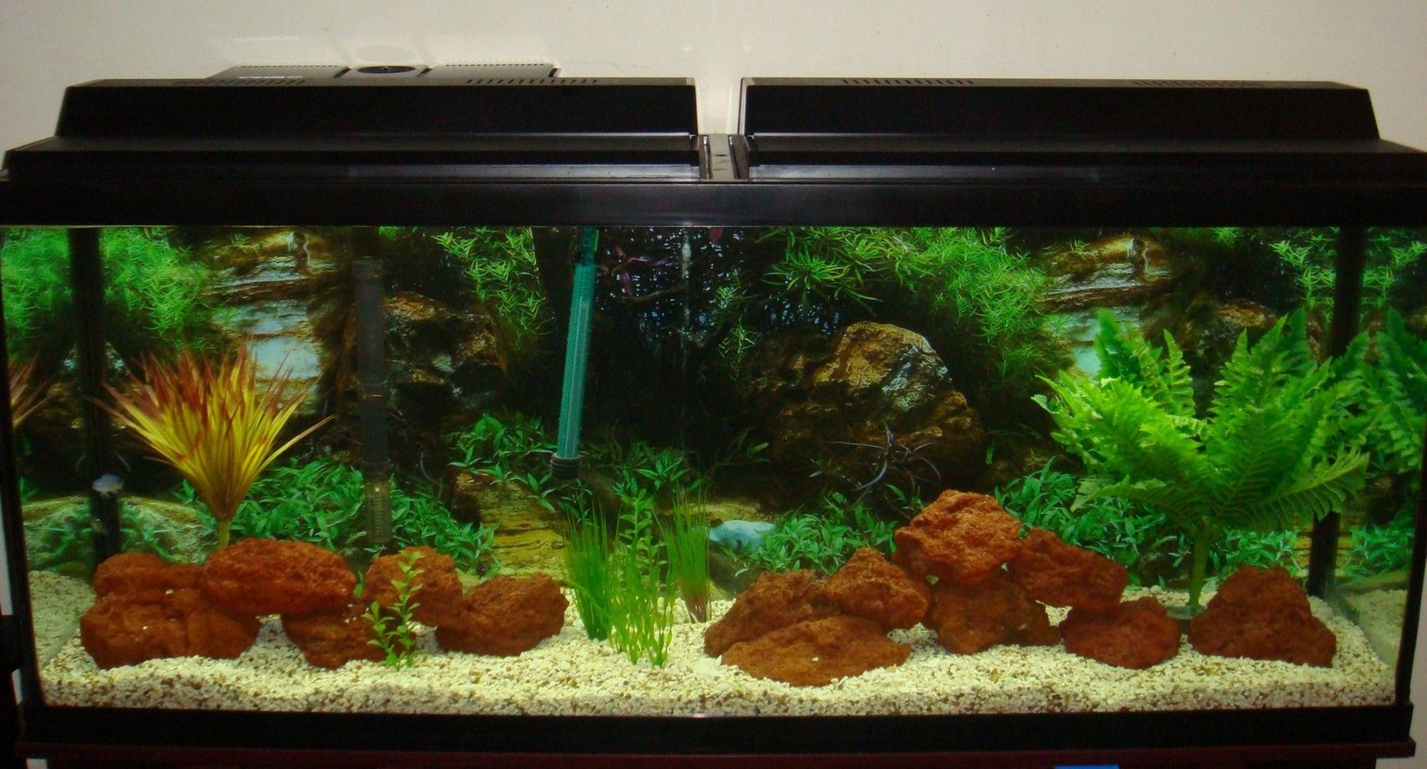 fish tank picture - 55Gallon African Cichlid Tank