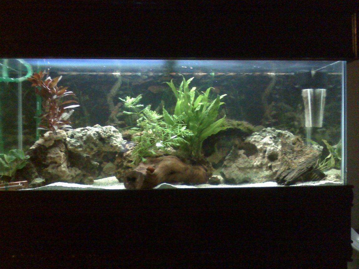 fish tank picture - African Cichlid Tank.