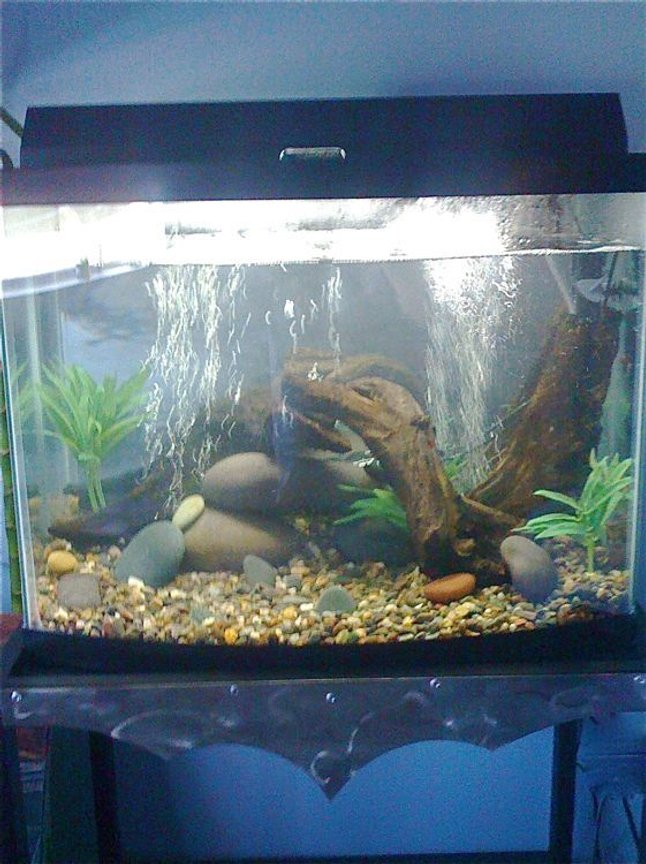 fish tank picture - newly setup 28 gallon euro bowfront biowheel 200 air pump rated 40 gallons 100 watt heater custom made steel stand by Unique Fabrications in Irvine California