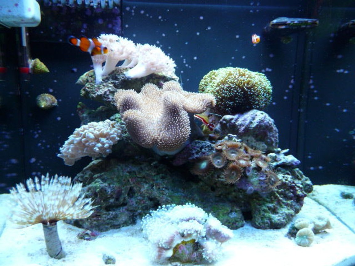 fish tank picture - Nano 12 Gallon JBJ DX, my first reef tank