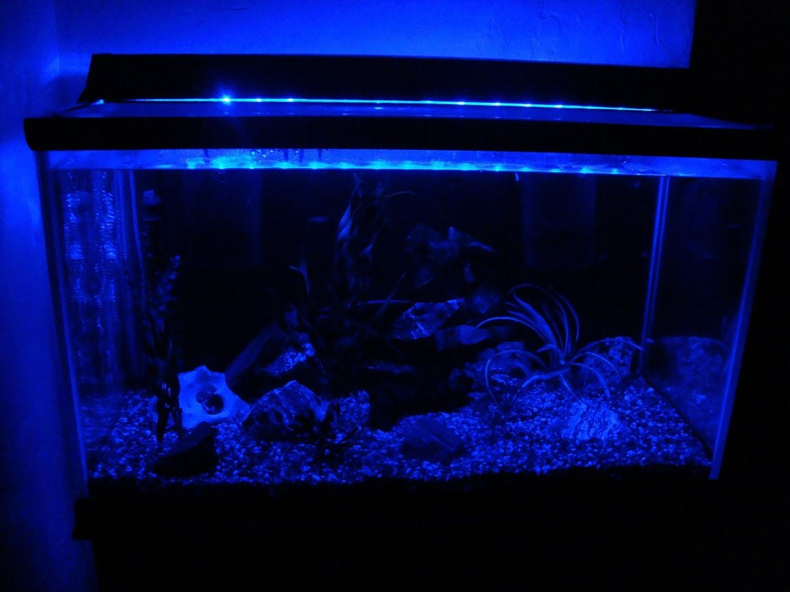 fish tank picture - I drilled a hole in the side of the hood and ran a blue LED rope light all the way around the inside to create a nightlight. I tried the commercial fish tank night lights, but to light up such a large tank with enough light to make a difference would cost a fortune. This was a ten dollar project.