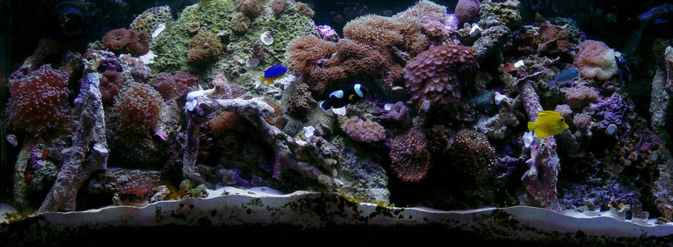 fish tank picture - 60 gal reef