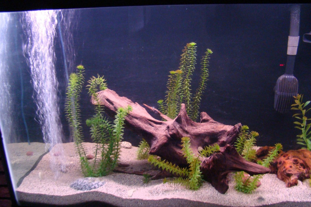 fish tank picture - LH closeup of the 125