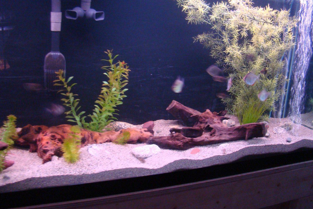 fish tank picture - RH 125 Gal.