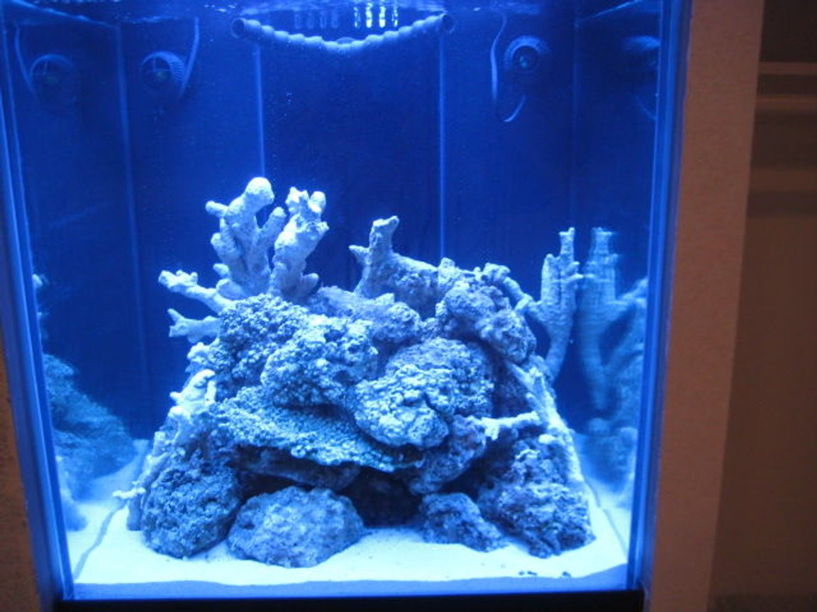 fish tank picture - FTS