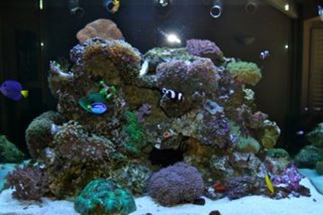 fish tank picture - Deepwater Paradise - Evening