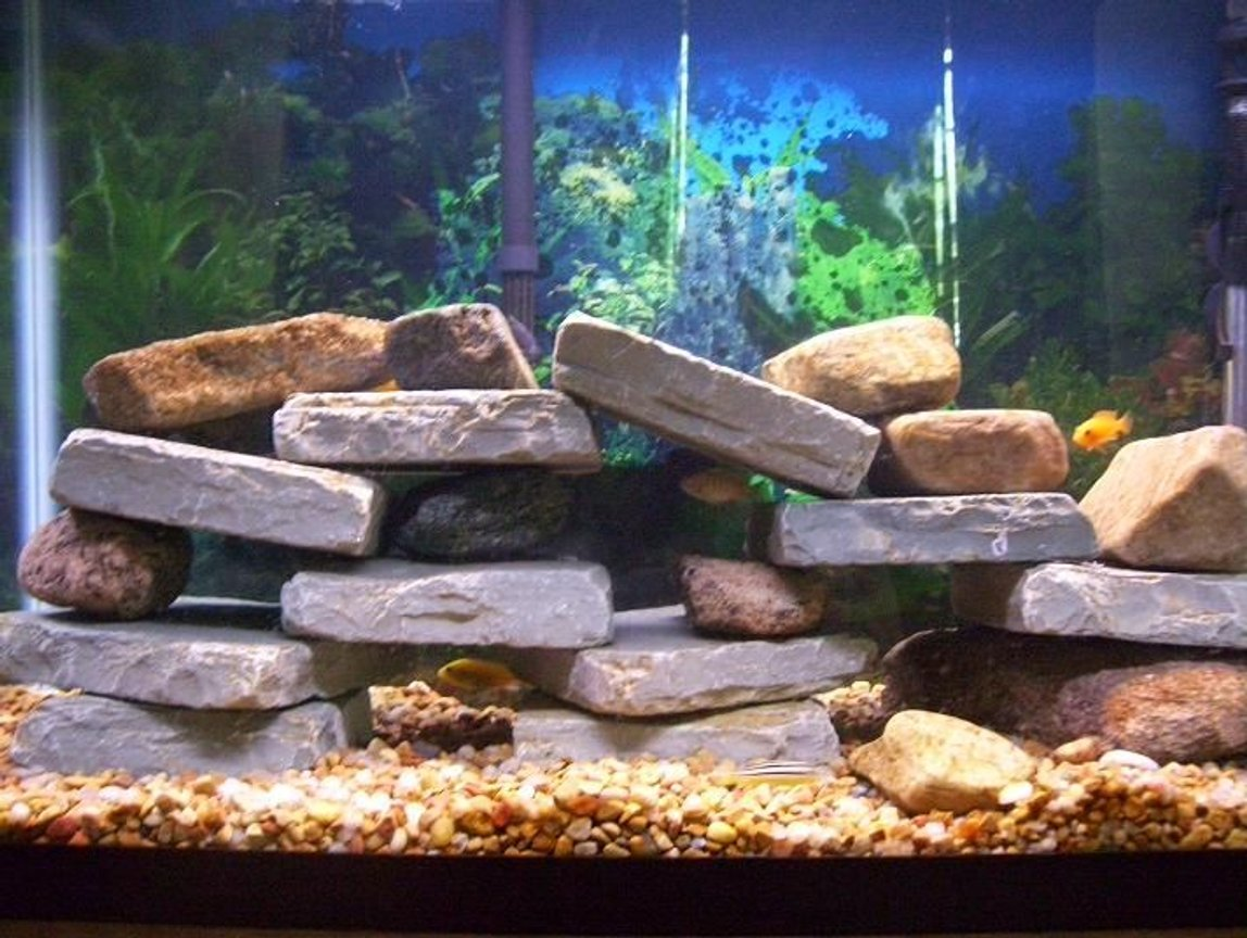 fish tank picture - African Cichlid tank 8 Small Cichlids and 1 pleco