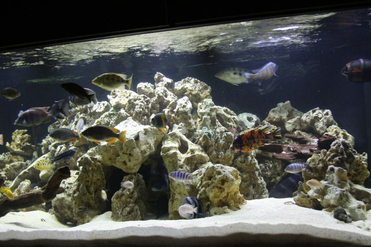 fish tank picture - A bit of a different angle