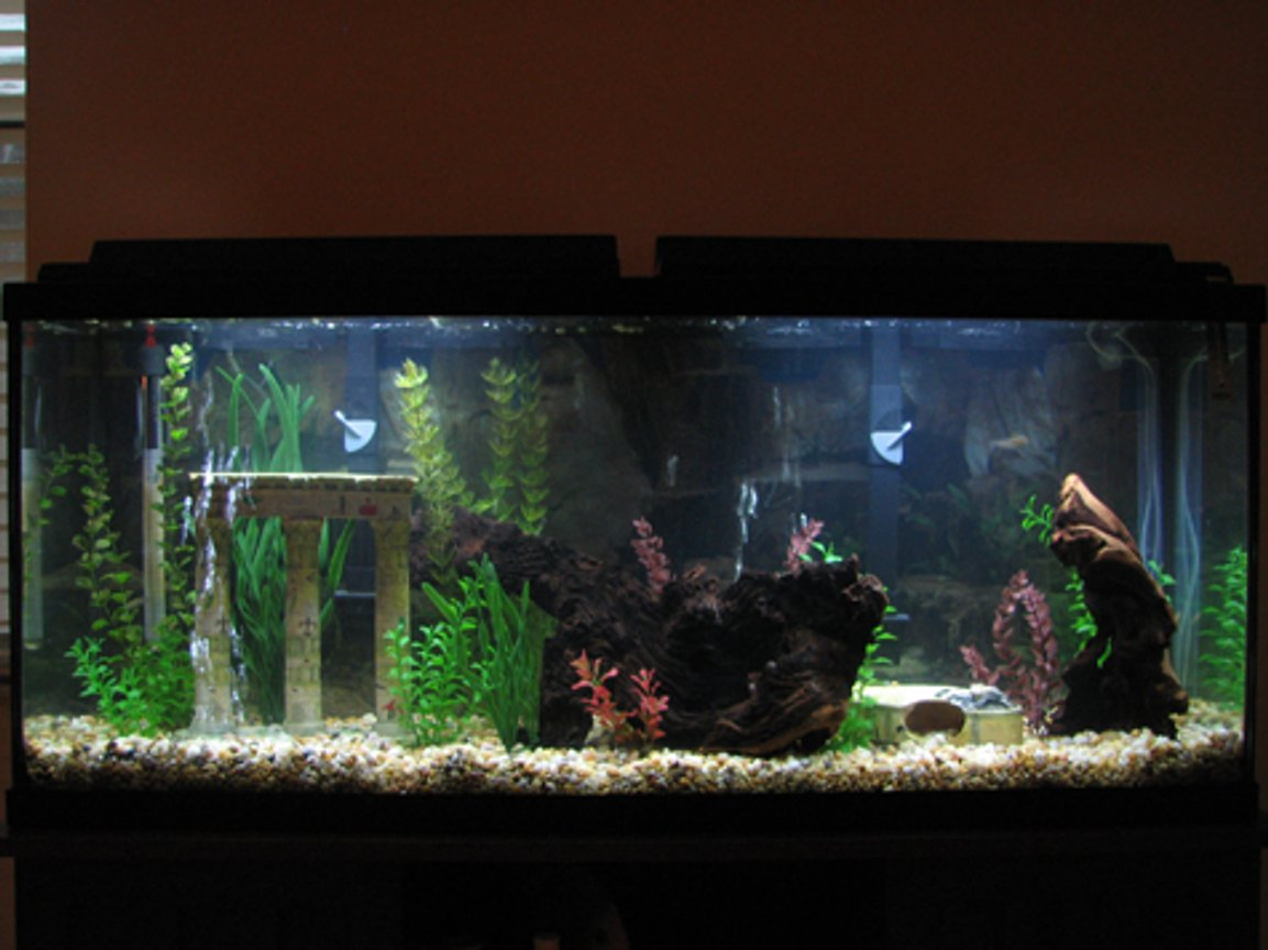 fish tank picture - 55 Gallon Amazon-type Tank. Nothing much in it now, will have tetras and angels.