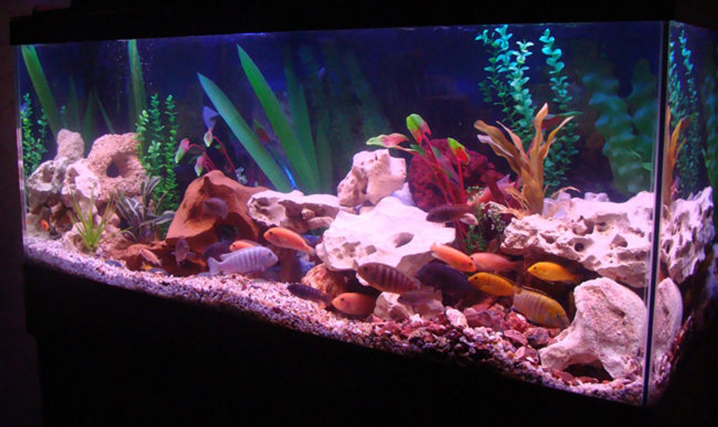 fish tank picture - 3 Weeks into the cycle and seascape...