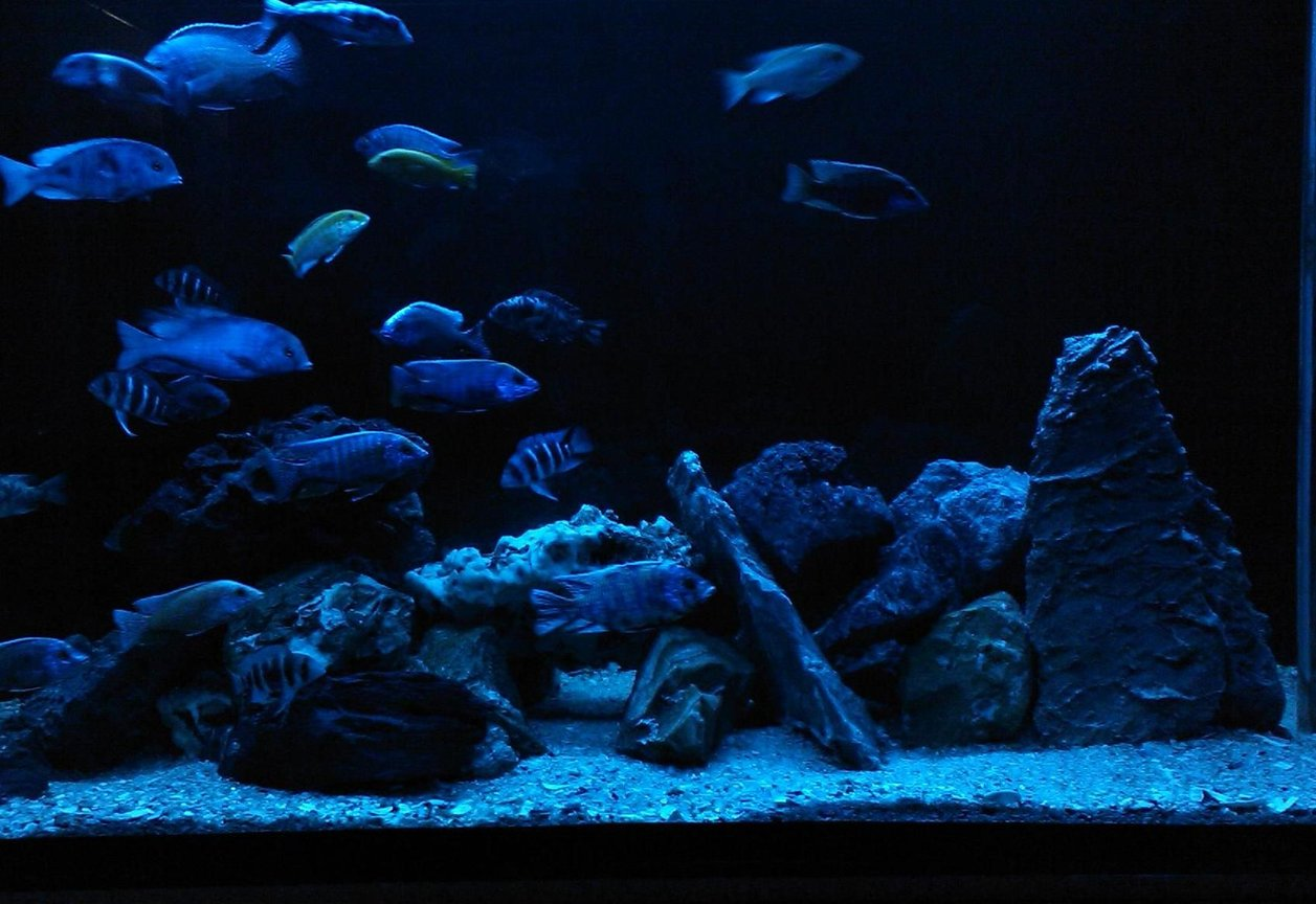 fish tank picture - blue light