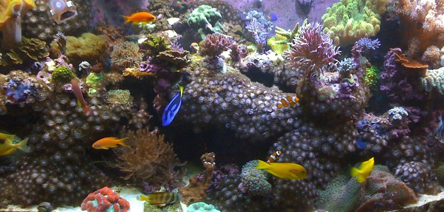 fish tank picture - a pic