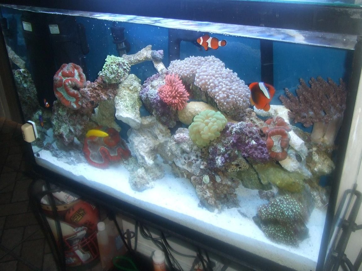 fish tank picture - side veiw
