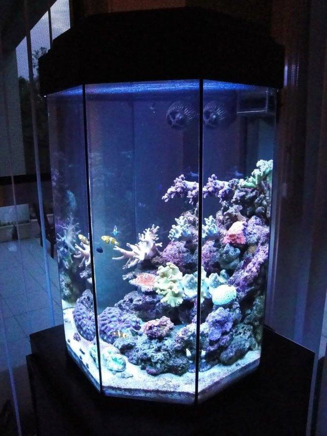 Photo 2 My 110l Octagonal Reef Tank Side
