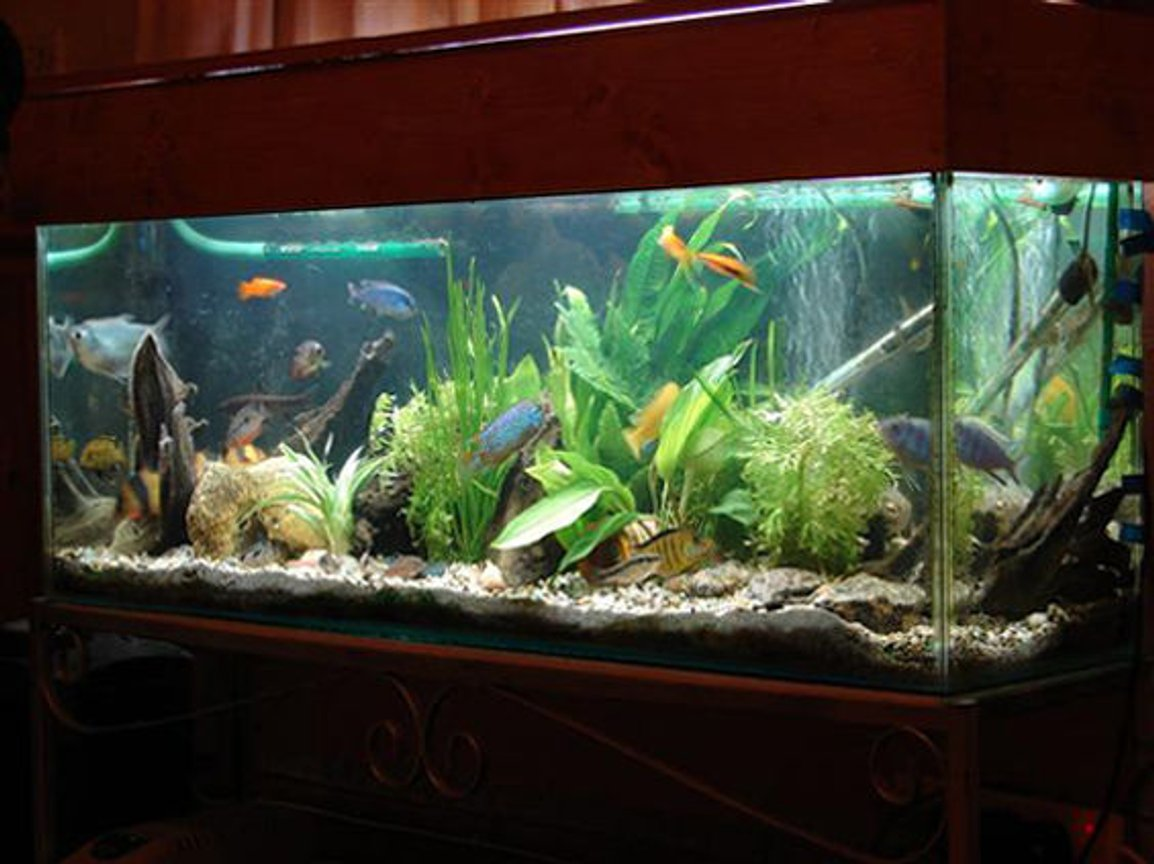 fish tank picture - wow this is my tank
