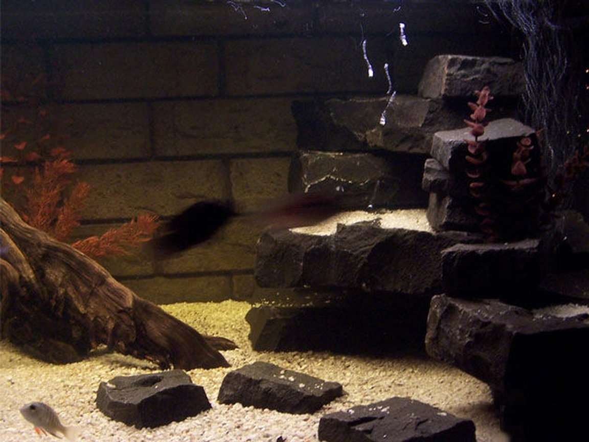 fish tank picture - Closeup shot, Right side. Again Mangrove Jack in shot the little photo whore. Oh wait, he wants to eat me.....right.