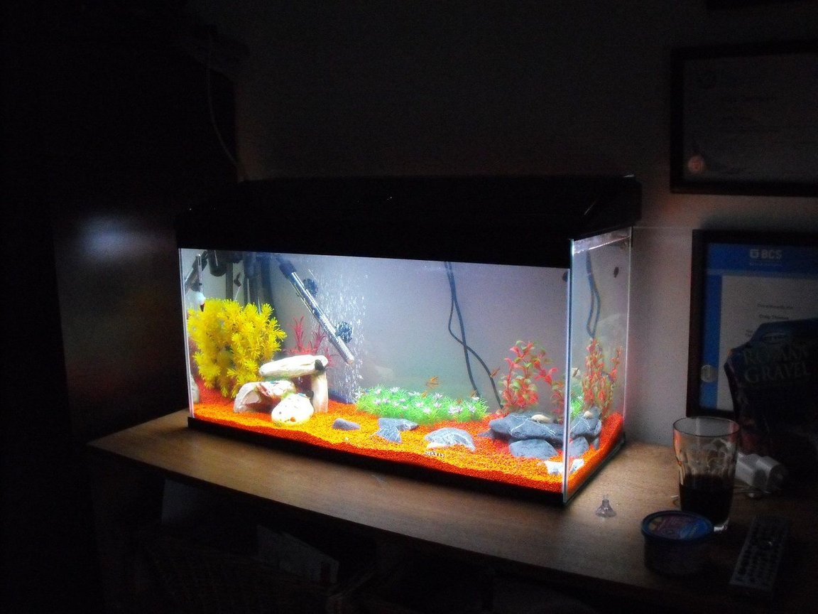 fish tank picture - my tanks on custom made unit which makes it look smaller then it is, but certainly brightens up the place